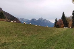 Balade montagne Rovagny
